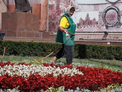 У Чернівцях на клумбах зацвітуть 10 тисяч тюльпанів