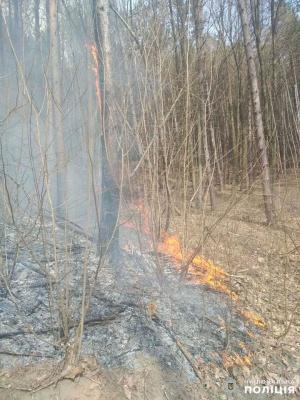 Масштабна пожежа: у селі на Буковині горять 3 гектари лісу