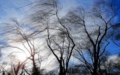 Рятувальники знову попередили про вітряну негоду на Буковині