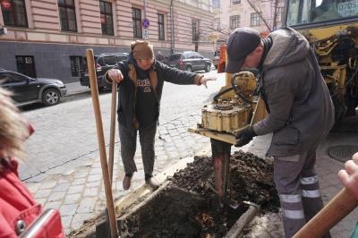 У центрі Чернівців комунальники почали саджати дерева - фото