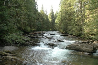 Гірські річки Буковини - одні з найчистіших в Україні