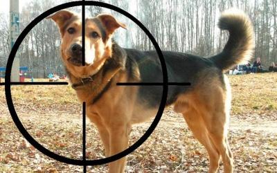 На Буковині двоє чоловіків обстріляли собак біля приватного ставка: одна тварина загинула