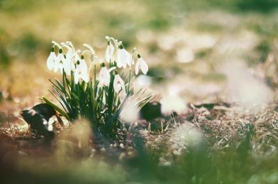 Як зустріти весну без авітамінозу: прості поради