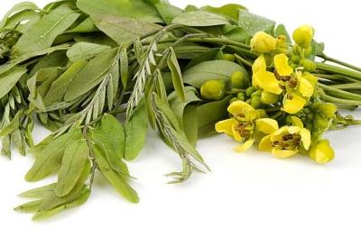 Найефективніші трави для схуднення: як приготувати і приймати