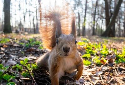 Кумедна білочка з київського парку дала майстер-клас з весняного позування - фото