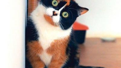 У США перестануть робити досліди на кішках, які проводили з 1982 року