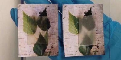 Вчені зі Швеції винайшли прозору деревину
