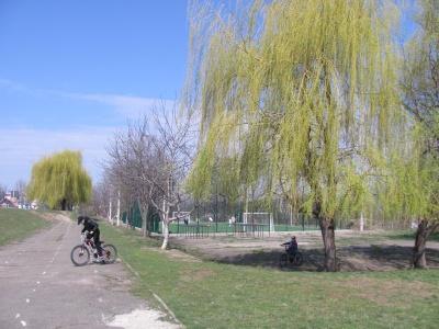 У Чернівцях у шкільному дендропарку зацвіли перші весняні квіти - фото