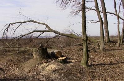 Вбило гілкою: у селі на Буковині розповіли деталі загибелі чоловіка в лісі