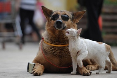 Власники собак щасливіші, ніж котолюби