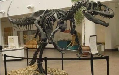Вчені знайшли уцілілу шкіру динозавра