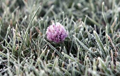 На вихідних на Буковині прогнозують заморозки