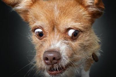 Фотограф показав кумедні знімки собак, які ловлять їжу