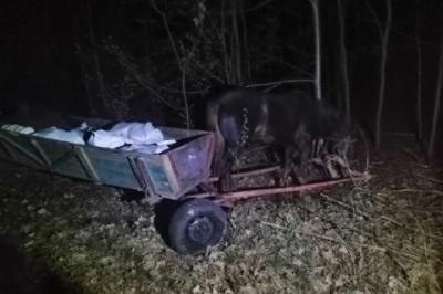 Затримали чоловіків, які везли підводами 800 кілограмів сала в Білорусь