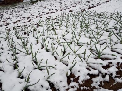 Буковинські Карпати засипало снігом – фото