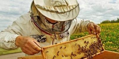 На Буковині випробують препарати для рослин, які не шкодять бджолам