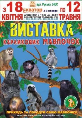 Виставка карликових мавпочок