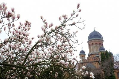 Вночі заморозки, вдень до +15: погода на Буковині 20 квітня