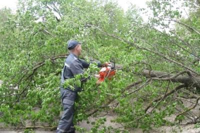 У Чернівцях дерево впало на жінку прямо біля її будинку
