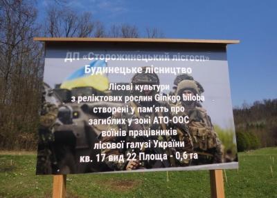 У Сторожинецькому лісгоспі висадили 400 гінкго в пам'ять про загиблих військових