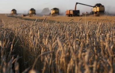 Українські аграрії експортували більше 41 мільйона тонн зернових