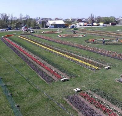На фестивалі тюльпанів на Буковині виступатиме «Лісапетний батальйон»