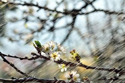 Травень розпочнеться з дощів та похолодання