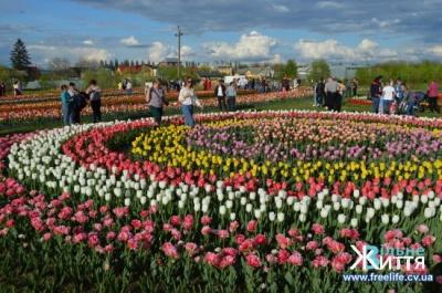 Черги, флеш-моб та концерт: як пройшов фестиваль тюльпанів – фото