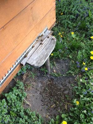 У селі на Буковині масово гинуть бджоли через кроплення садів – фото