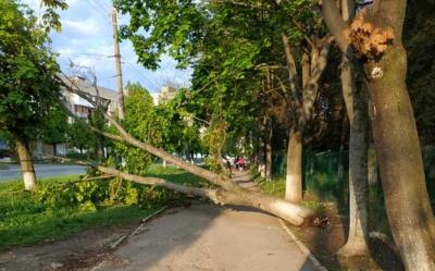 У Чернівцях поблизу школи впало аварійне дерево – фото