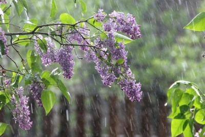 Синоптики прогнозують грозу в Чернівцях 4 травня
