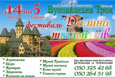 Сьогодні на Буковині - родинний фестиваль у долині тюльпанів