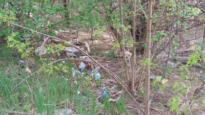 Сплошная свалка: берега Днестра на Буковине утопают в пластике и стекле - фото