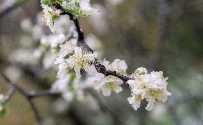 Похолодання не відступає: синоптики попередили про заморозки на Буковині