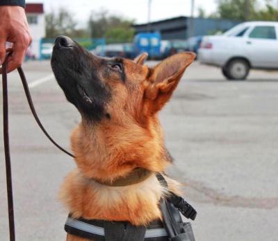 У Чернівцях для собак проведуть безкоштовні курси від професійних кінологів