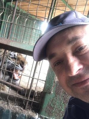 «Тигриця була ледь жива»: ветеринар розповів про порятунок хижака у приватному зоопарку на Буковині. Оновлено