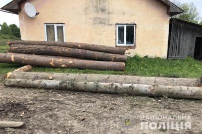 На Буковині розшукали крадія лісодеревини