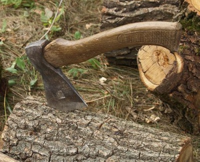 Петиція про новий порядок видалення дерев у Чернівцях набрала потрібну кількість голосів