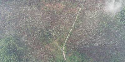 На Житомирщині буревій повалив 100 гектарів лісу – відео