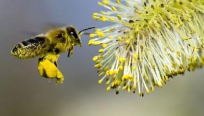 Сьогодні відзначається Всесвітній День бджіл
