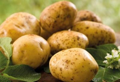 Ціни на молоду картоплю впали до найнижчого рівня за три роки