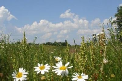 В Україні тиждень розпочнеться літньою погодою, закінчиться – похолоданням