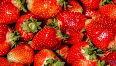 Українська полуниця в Білорусі продається вдвічі дорожче, ніж в Україні