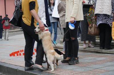 «Собаки не винні»: під мерією Чернівців влаштували два пікети через безпритульних тварин - фото
