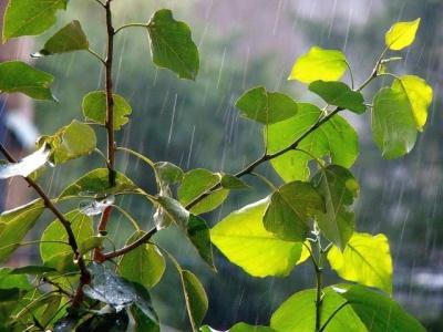 Синоптики розповіли, яким буде початок літа на Буковині