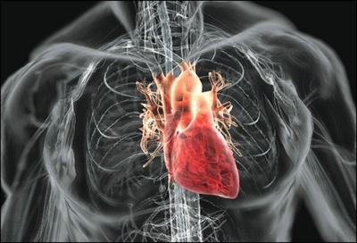 Учені назвали небезпечний для серця продукт