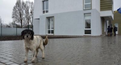У Чернівцях розпочався кадровий конкурс на посаду керівника «Центру стерилізації тварин» – наживо