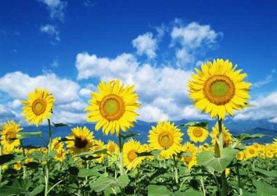 У Чернівцях синоптики прогнозують закінчення літа вже у другій половині серпня