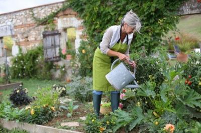 Посівний календар на червень 2019: коли найкраще садити овочі та фрукти