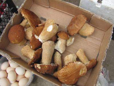 На ринках Чернівців з'явилися білі гриби – фото